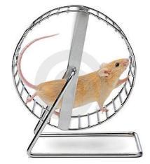 corrida-dos-ratos