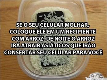 celular-e-arroz (1)