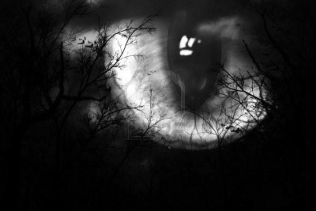 criaturas_da_noite