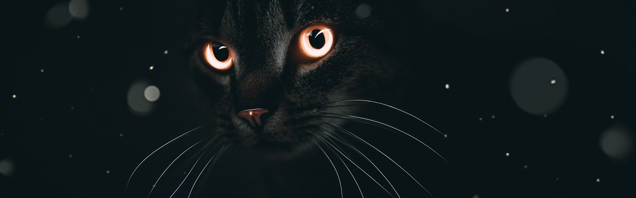 cat eyes animal background fantasy 4684197