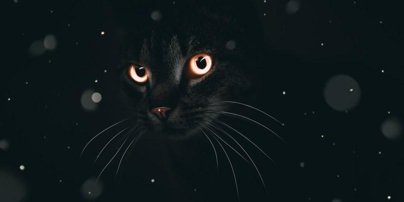 cat eyes animal background fantasy 4684197