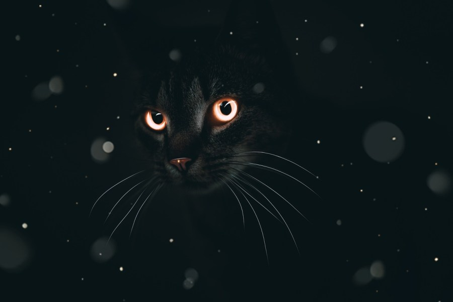Cat Eyes Animal Background Fantasy