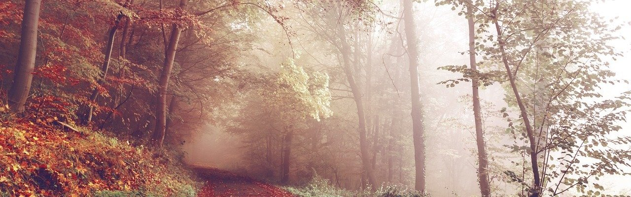 Path Woods Autumn Footpath Forest  - Free-Photos / Pixabay