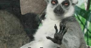 calm down bro im lemur jpg