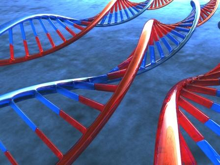 Genetica3