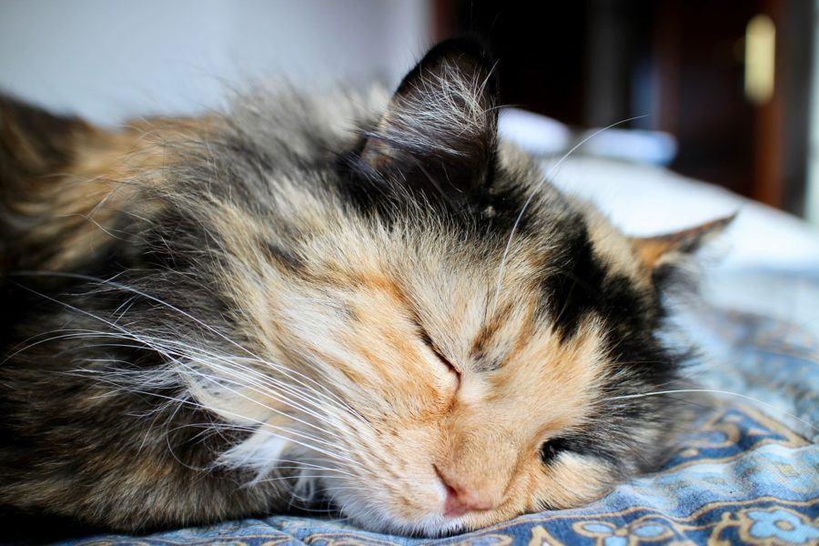 Wie Viel Arbeit Macht Eine Katze Schlafen Katzen Den Ganzen