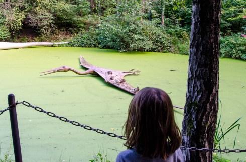 Foto mit Luis und einem Flugsaurier im Saurierpark in Kleinwelka.