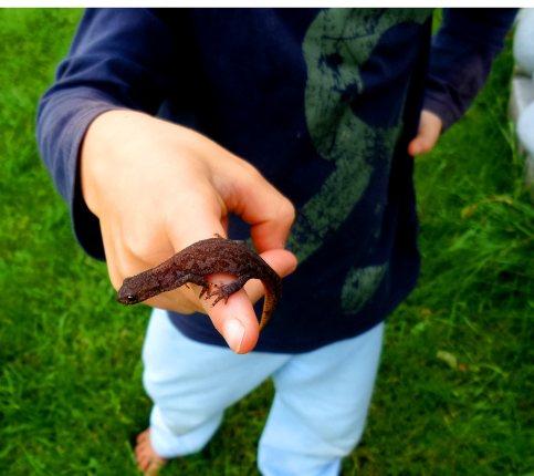 Foto von Bela mit einem Molch in der Hand in Omas und Opas Garten.