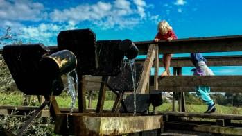 Foto von Bela an der Wassermühle am Wassertretbecken an der Roth in Horgau.