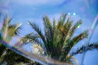Foto einer Dattelpalme hinter einer Riesenseifenblase.