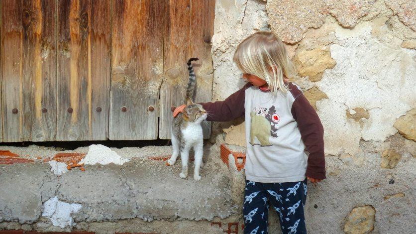 Foto von einem Kind, das gerade eine Katze streichelt.