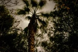 Foto von einer Palme in der Nacht im Mondlicht, vo der Froschperspektive aus fotografiert.