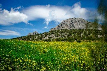 Foto von Wiese, Olivenbäumen und einem Berg.