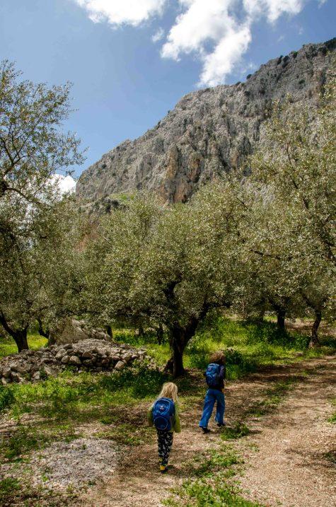 Foto von zwei Kindern beim Wandern im Olivenhain, im Hitergrund ein Berg.