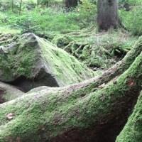Wo die schwäbelnden Gnome wohnen