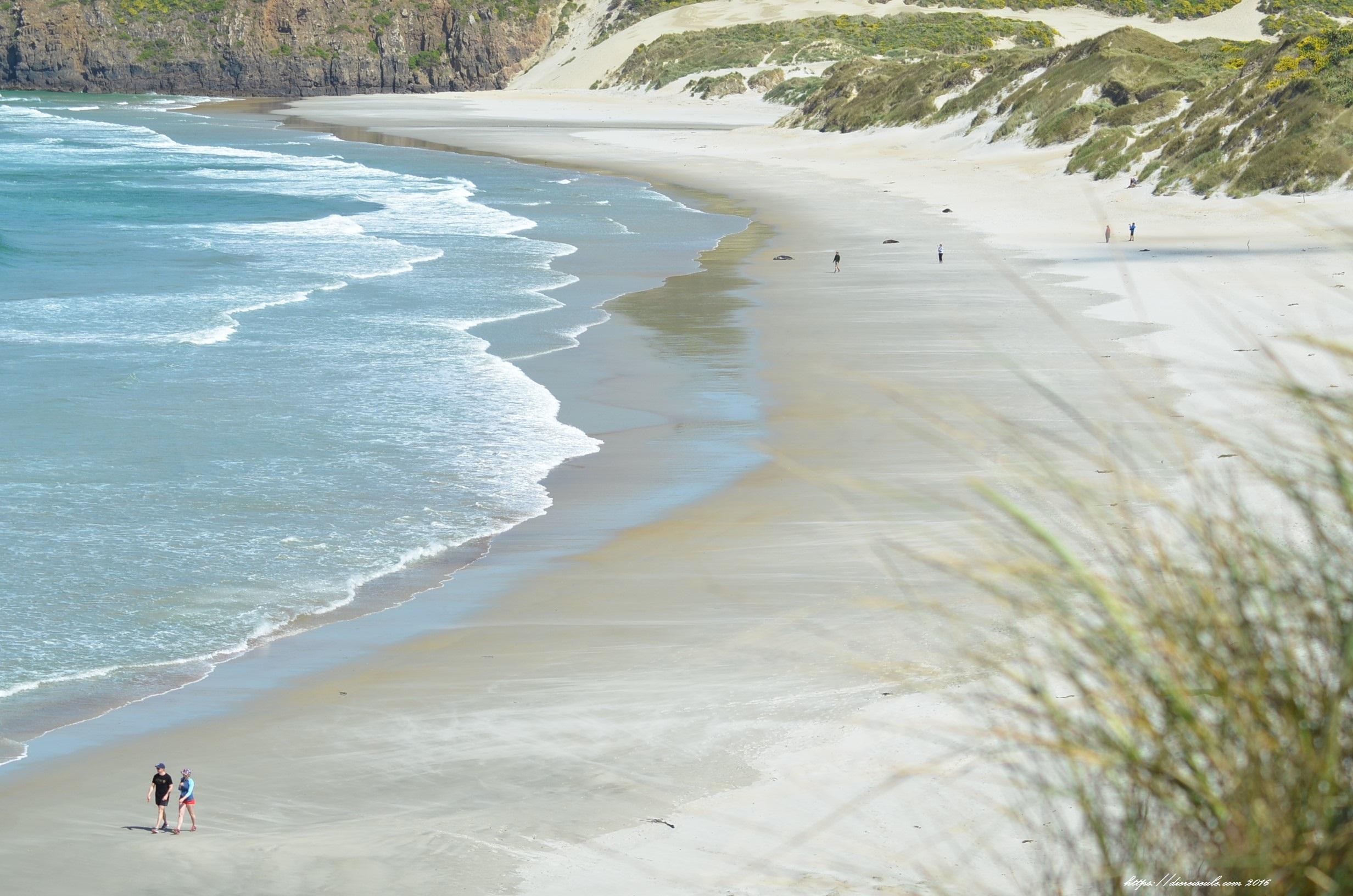 Sandfly Beach Otego Peninsula bei Dunedin, Neuseeland