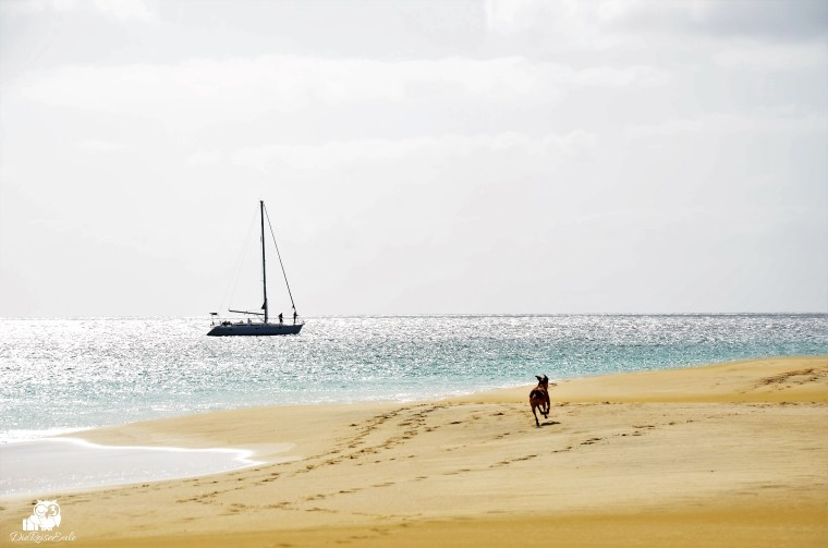 Flitterwochen Sal Strand