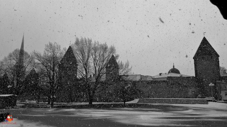 Schneefall (1)