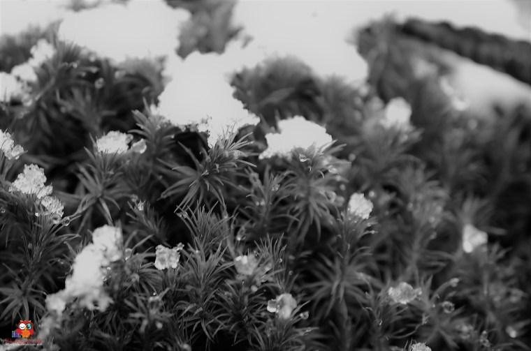 Schneefall (5)
