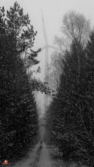Schneefall (8)
