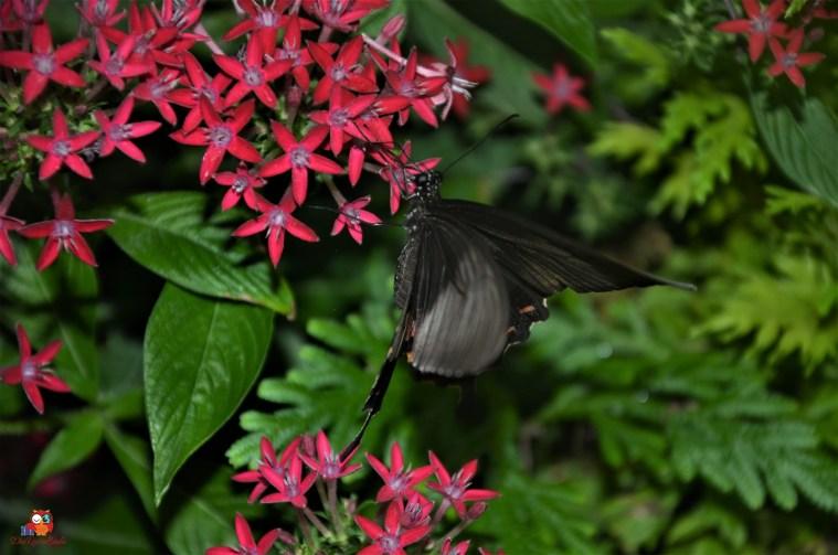 Butterfly Garden am Changi Airport