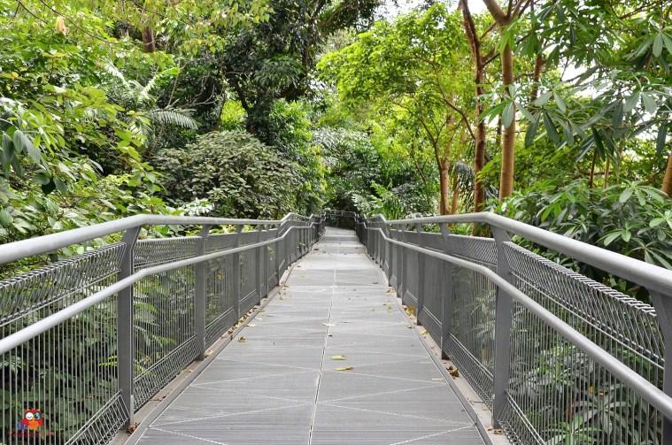 Baumkronenpfad in Singapur