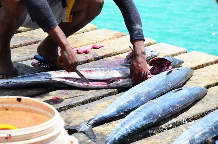 Fisch wird direkt am Steg filetiert und ausgenommen