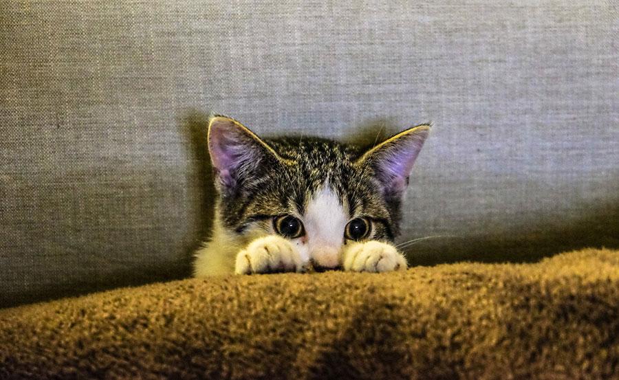 Bied je kat of hond een fijne jaarwisseling