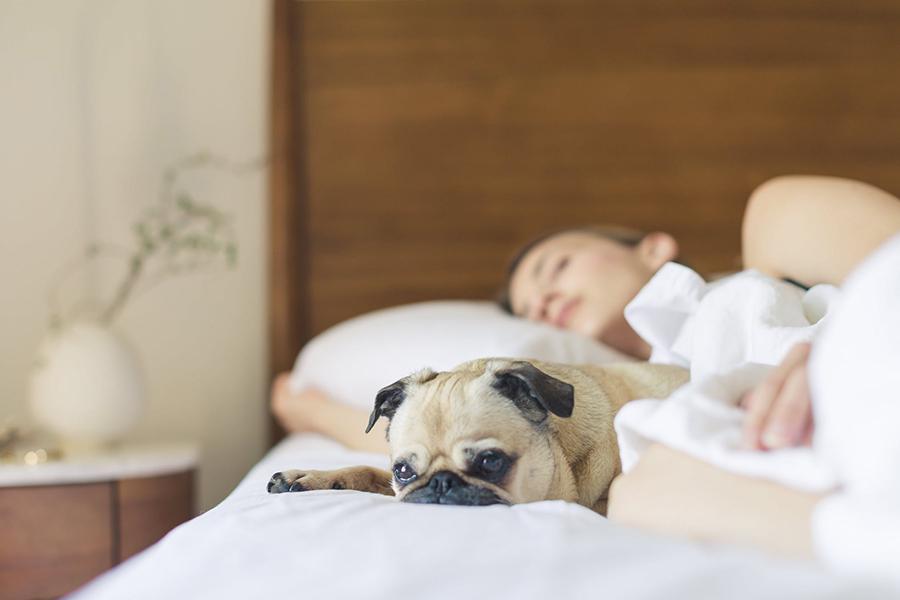 Is het coronavirus gevaarlijk voor je huisdier?
