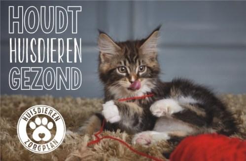 Huisdieren ZorgPlan | Dierenkliniek Winkelhof & Rijnwoude
