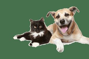 https://i1.wp.com/dierenpension.prinsenbankhoeve.nl/wp-content/uploads/2017/04/dogs.png?resize=300%2C200&ssl=1