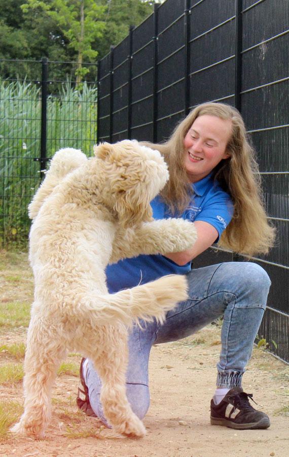 https://i1.wp.com/dierenpension.prinsenbankhoeve.nl/wp-content/uploads/2018/07/WEL-nogniet-gebruikt-hond-spelen-staand.jpg