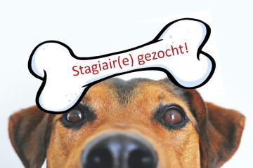 Stagiair(e) gezocht