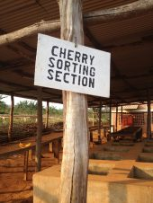 CHerrySortingSection