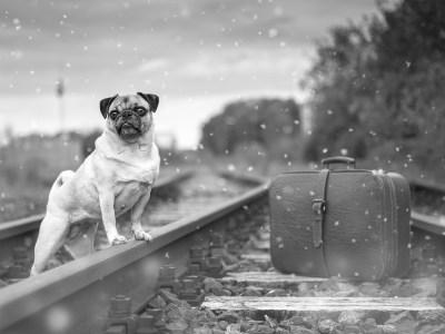 Hond neemt trein naar Leiden