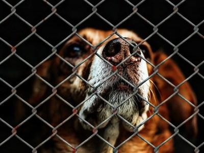 Hond vastgebonden aan hek dierenasiel