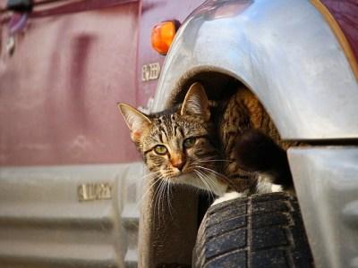 Dierenambulance waarschuwt voor katten onder motorkap