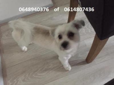 Hond Simba al ruim 3 weken vermist