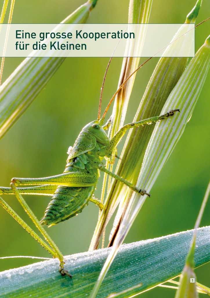 Tag der Insekten 1