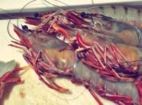Fischteller Segelrezept Bordküche