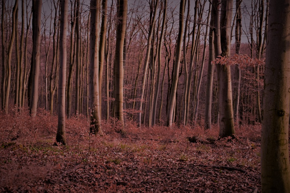 PinkForest © Silvia Springer