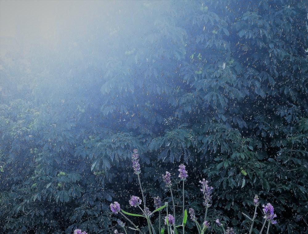 Rainy © Silvia Springer