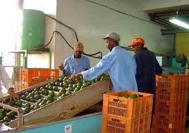 cultivadores