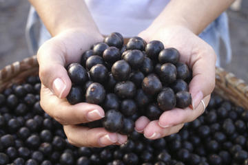 Hands full of acai berries.