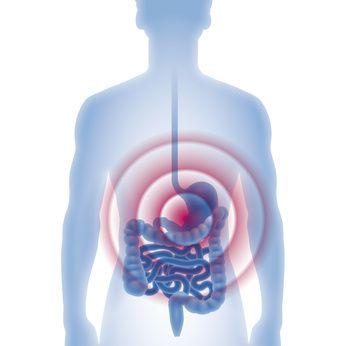 胃が吸収しているイラスト