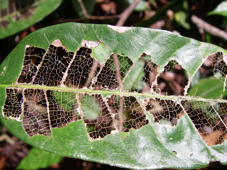 Tổng hợp 11 loài côn trùng, sâu hại chuyên phá hoại cây trồng, hoa trái