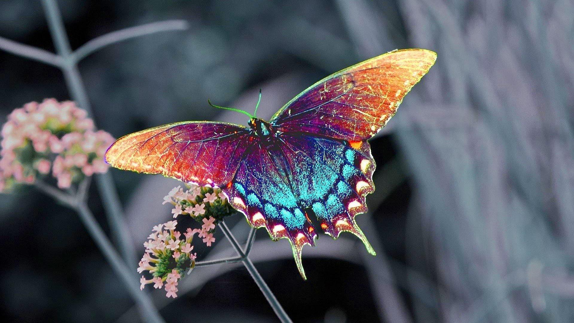 10 Sự thật thú vị về loài bướm
