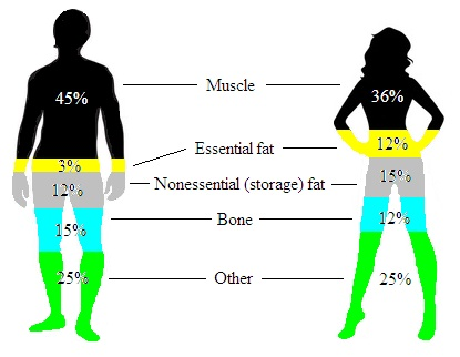 Body Same weight fat different