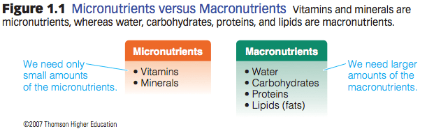 Macronutrients versus Micronutrients