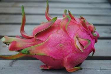 Pitaya rouge